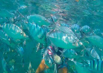 snorkeltour phangan0 400x284 - Home